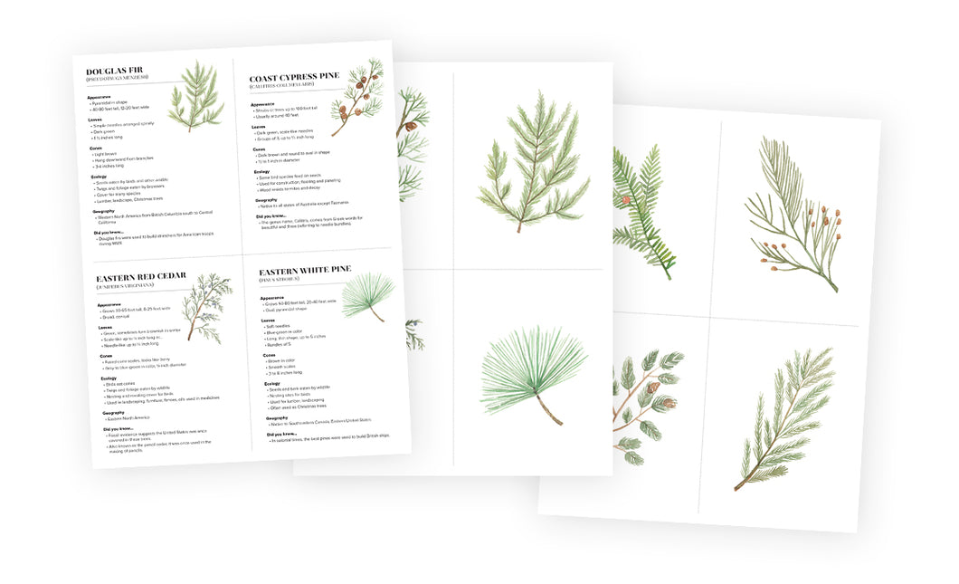 Flash Cards - Evergreen Trees
