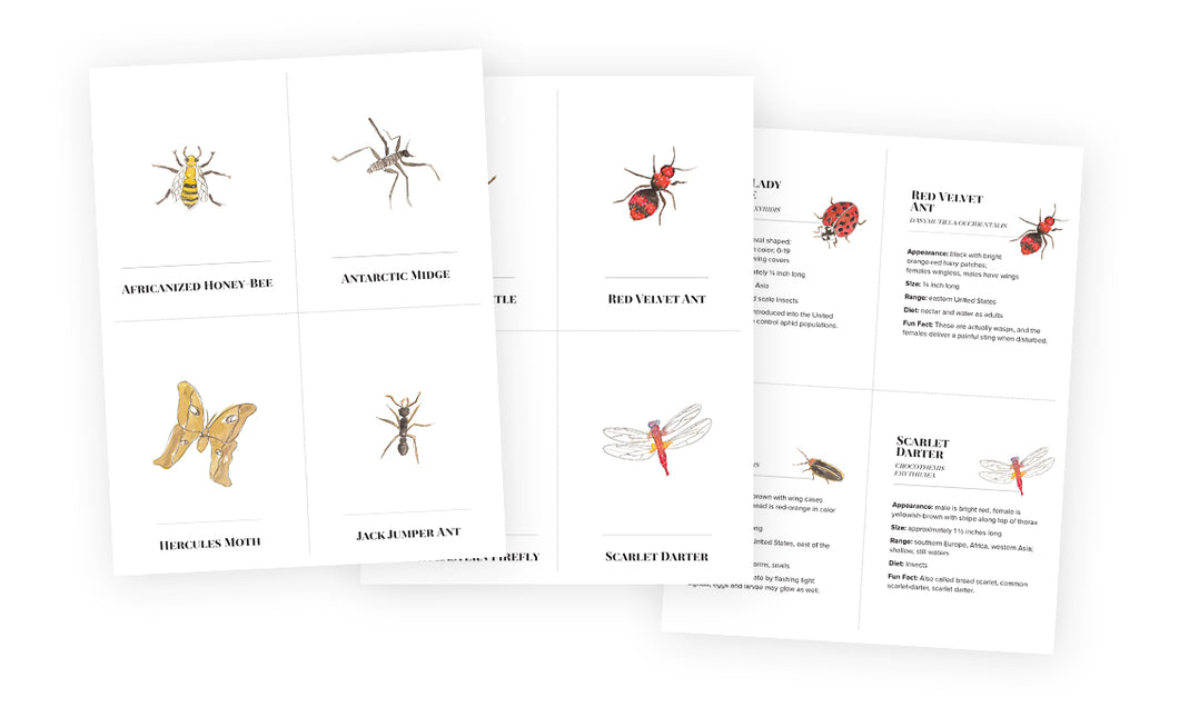 Flash Cards - Insects