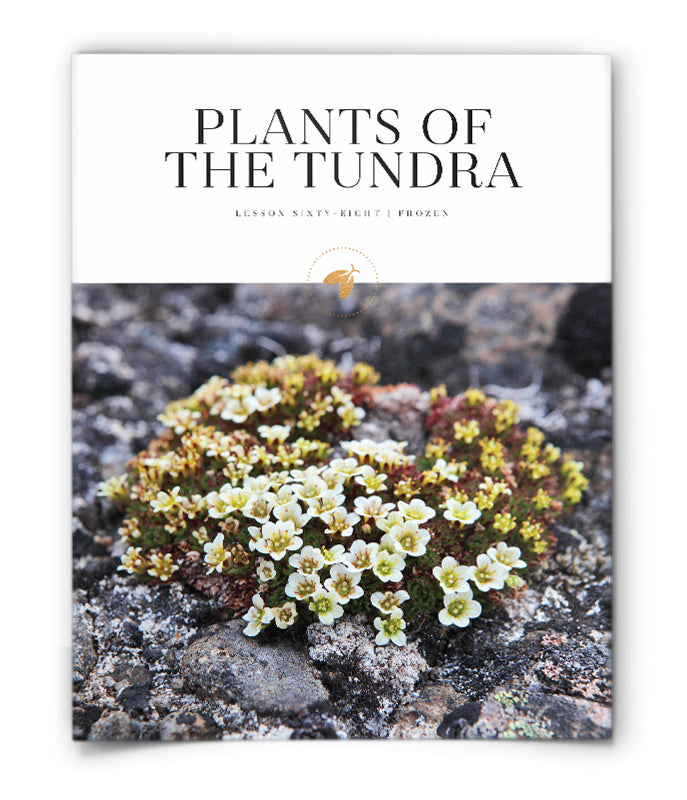 Plants of the Tundra
