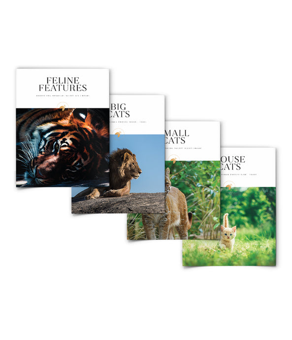 Roar! Bundle