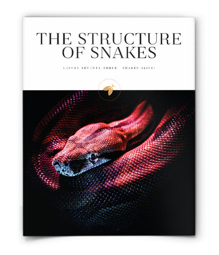 The Structure of Snakes