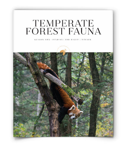 Temperate Forest Fauna