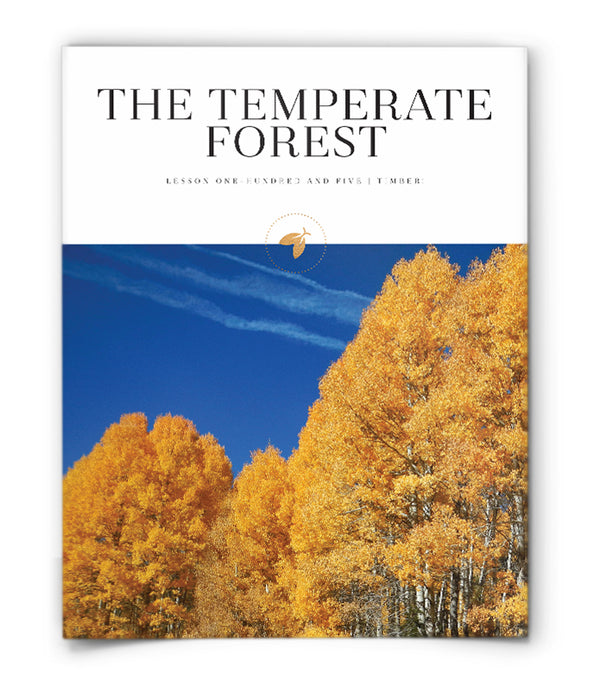 The Temperate Forest