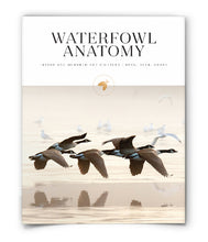Waterfowl Anatomy