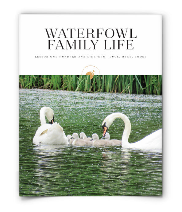 Waterfowl Family Life