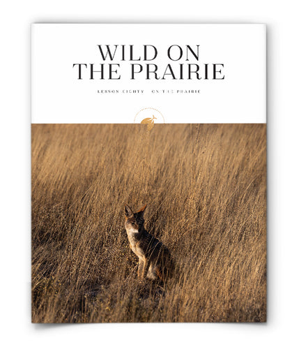 Wild on the Prairie