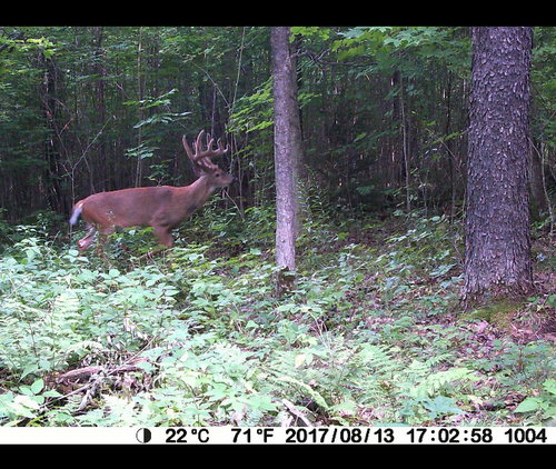 deer picture from BlazeVideo trail camera