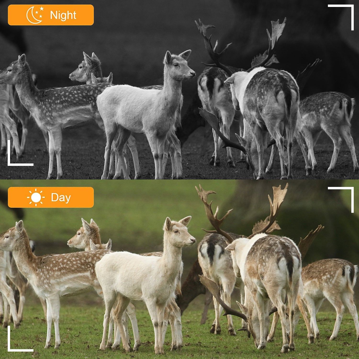 16MP 1080P Game Trail Deer Hunting Camera with Night Vision 120° 2-PIR Sensor 0.2S Fast Trigger Waterproof & Password Protected Photo & Video Model