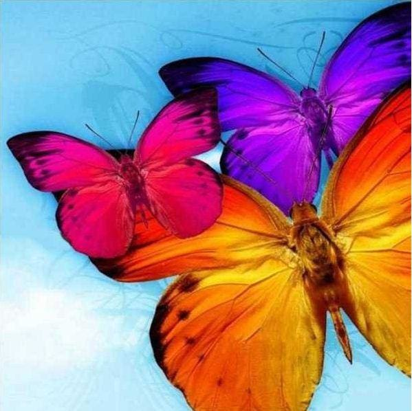Colorful Butterfly Trio Full Diamond Painting Kits Alisa Diamond Paintings