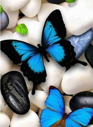 Diy Diamond Painting Kit Full Square Drill Butterfly On Stones Alisa Diamond Paintings