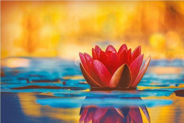 Water Lotus Full Coverage Diamond Art Painting Kits ALISA Diamond Paintings