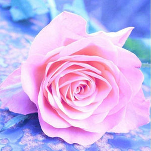 Diamond Painting Rose Full Pasting Area Alisa Paintings