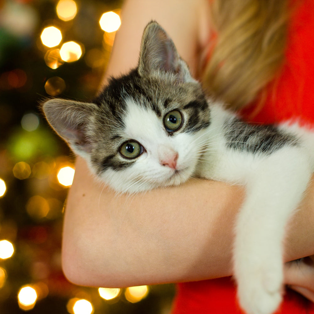 Keep Pets Safe During the Holidays