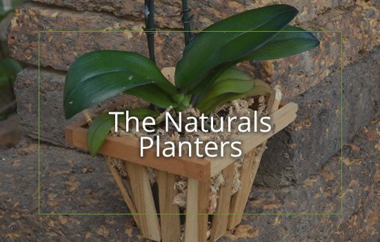 The Naturals Planters - Big Grass Living