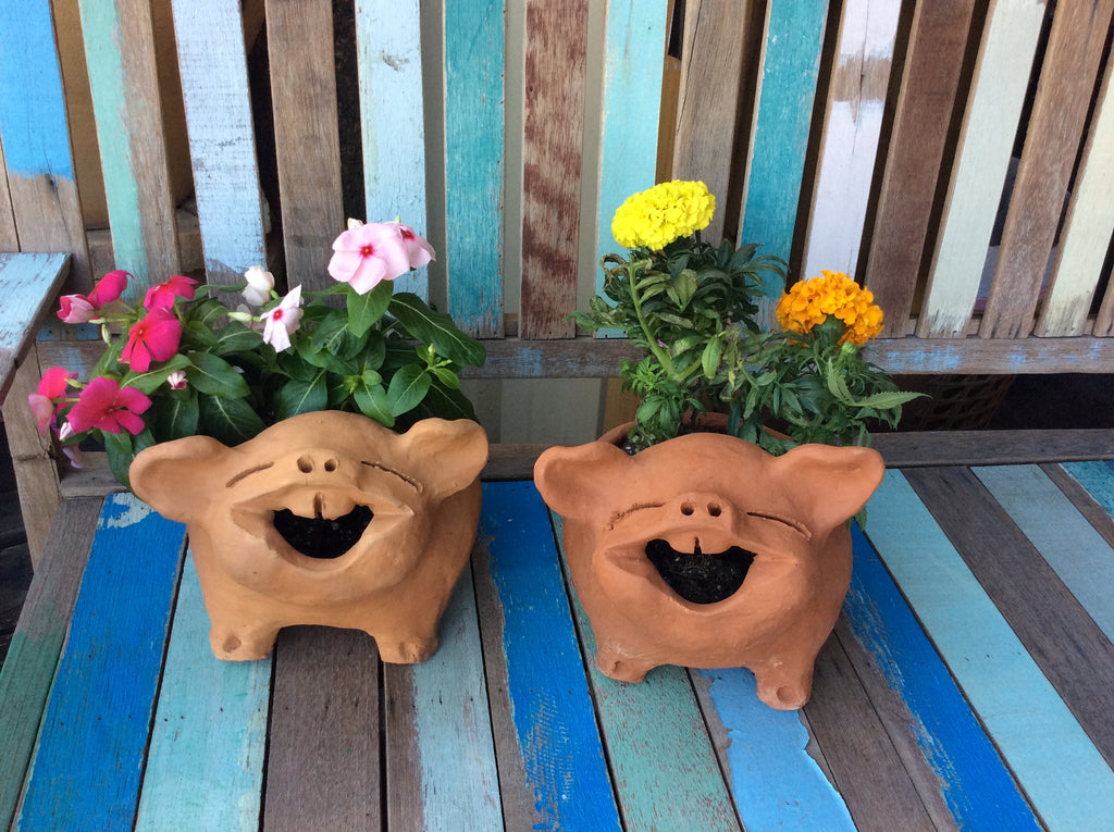 Happy Pig pot with Planted