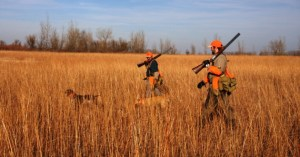 Upland Game Bird Forecast for 2012-2013