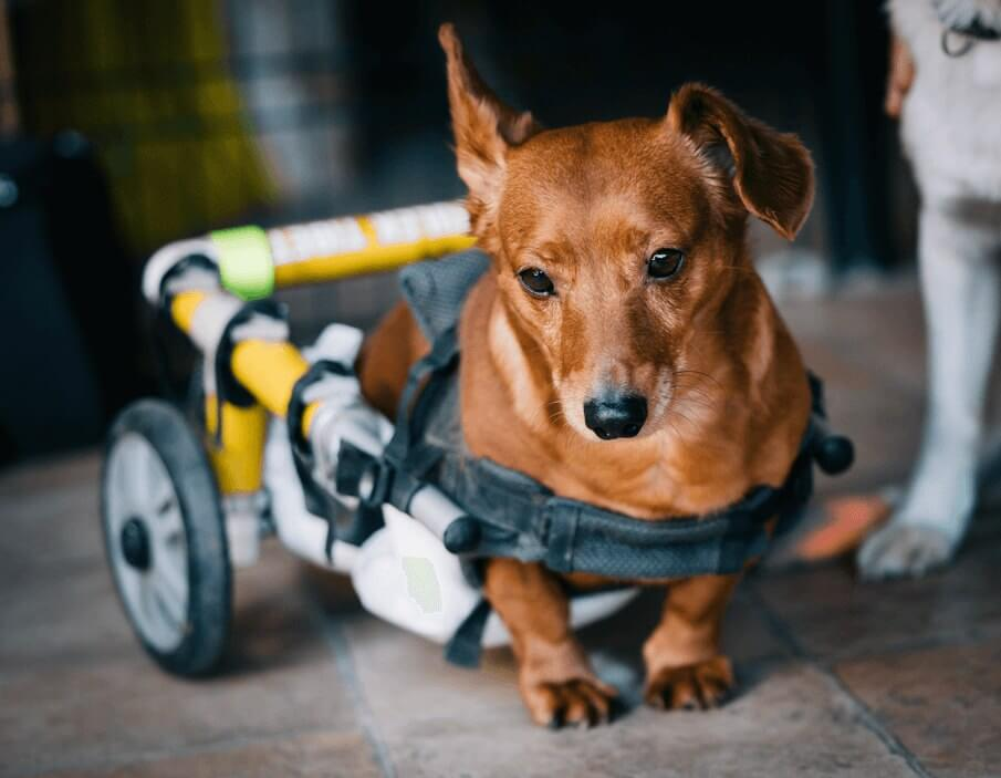 To make life easier for Older or Disabled Pets