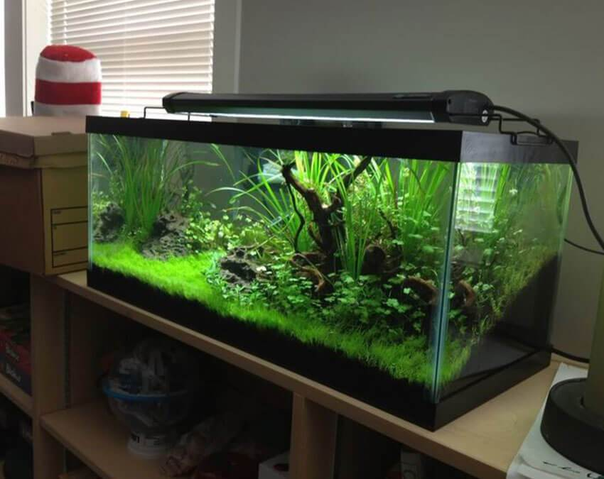 Fish Tank Decor | Artificial Grass weird Cuts