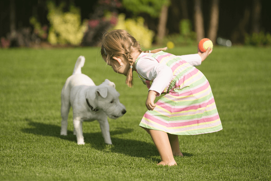 Artificial Grass for Dogs and Pet Turf