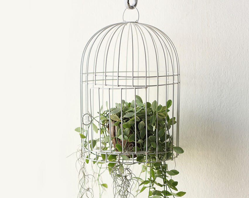 Cage It | DIY your own Hanging Garden
