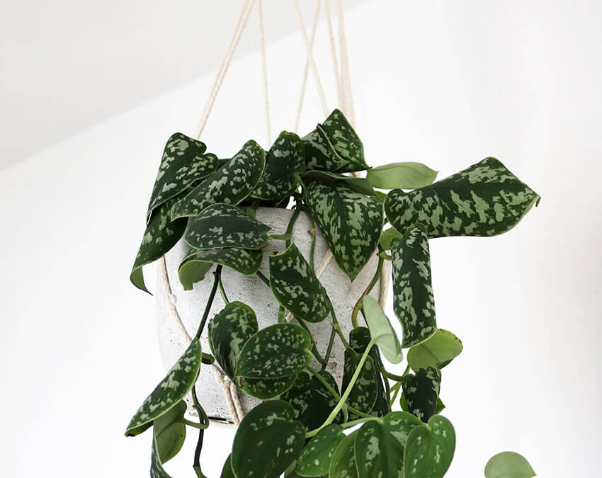Hang it at the center | DIY your own Hanging Garden