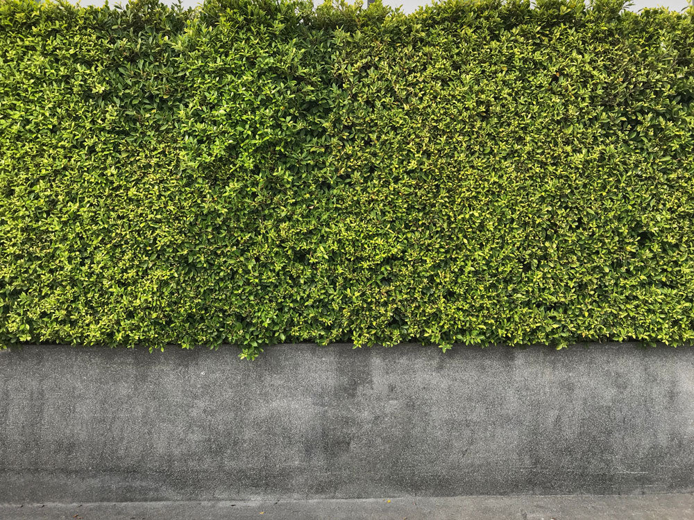 How to Install Artificial Hedges on a Brick/Concrete/Stone Wall