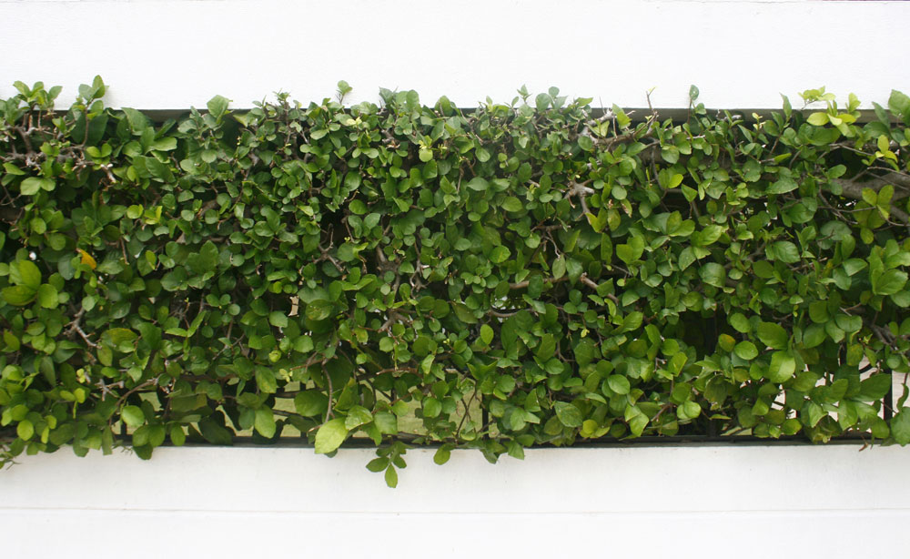 How to Install Artificial Hedges on a Wooden Wall