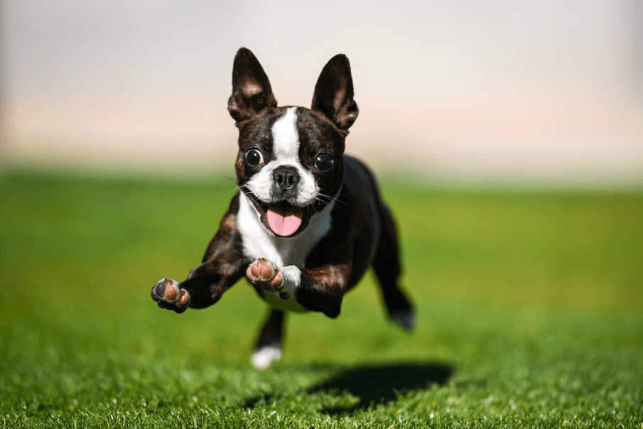 Ultimate guide natural and artificial grass dogs | Running