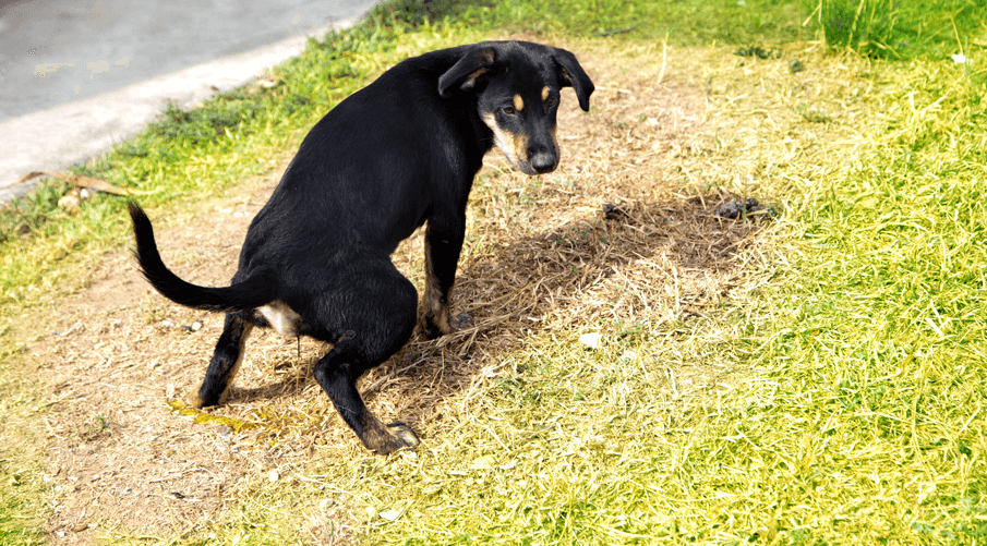 The Ultimate Guide to the Best Natural and Artificial Grass for Dogs | Urine