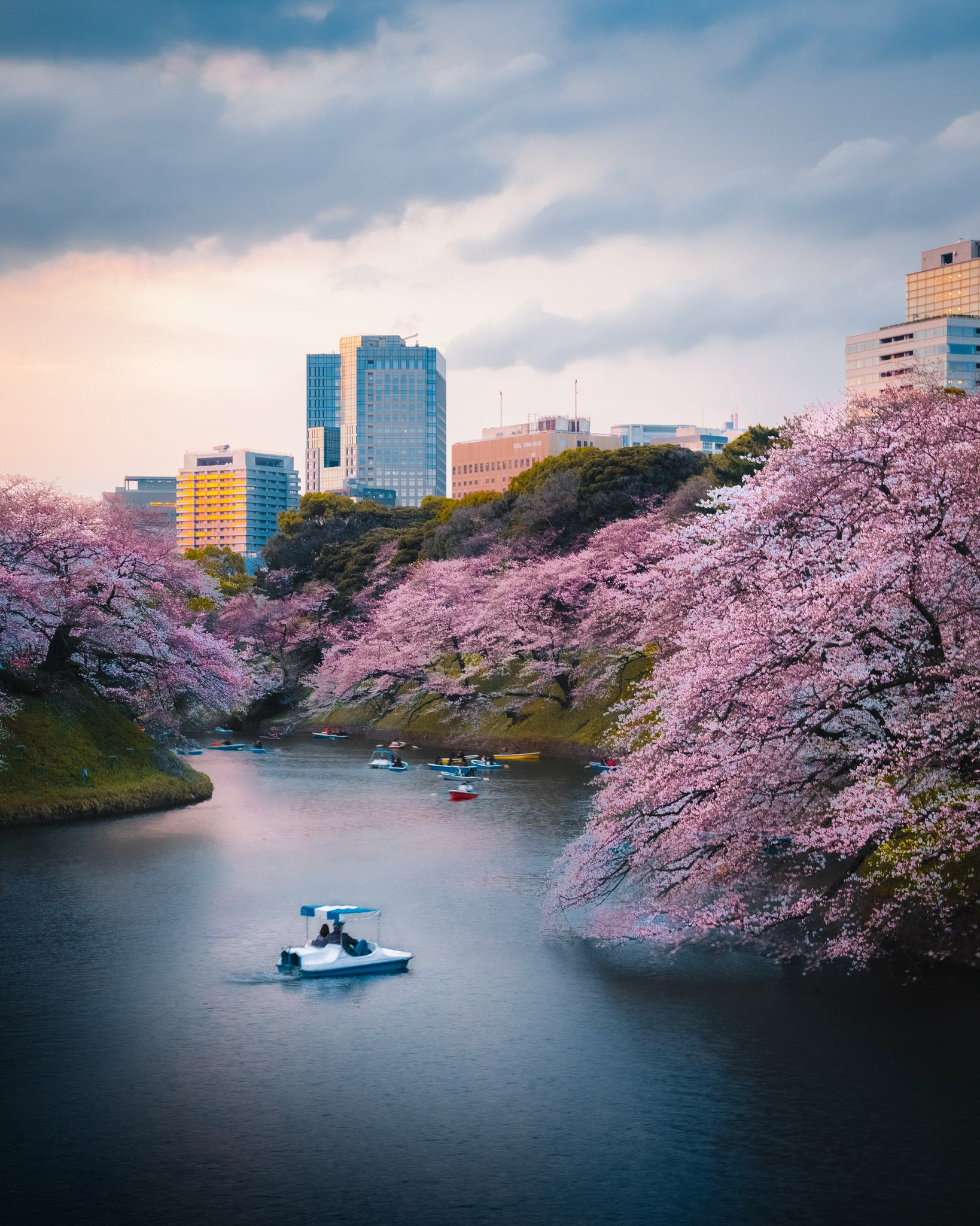 Imperial Palace Cherry Blossoms Tokyo