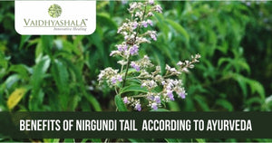 Nirgundi Tail Benefits, Uses, Ingredients, and Side Effects