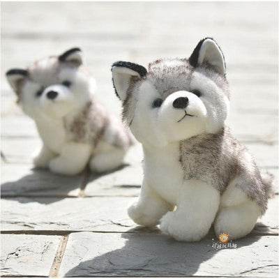 Little Husky Plush Toy