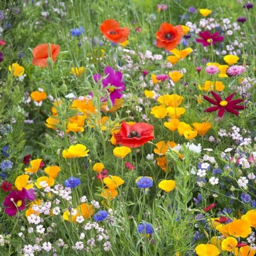 Premium Wildflower Meadow Mix - 10g pack