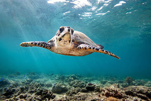 Meet The Sea Turtles