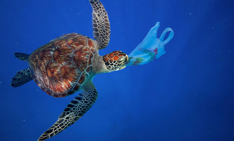 sea-turtle-plastic-pollution