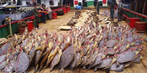 sea-turtle-illegal-trade