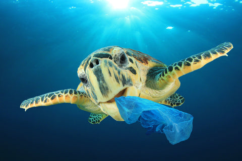 sea-turtle-plastic
