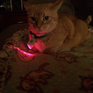 Cat Collar Laser Toy