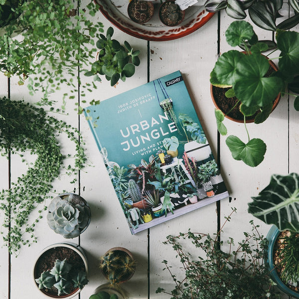 Top reads for indoor gardens