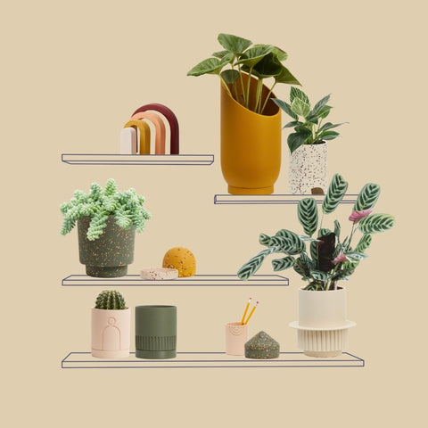 Plant - OUR TIPS TO COMPOSE A DYNAMIC SHELFIE.