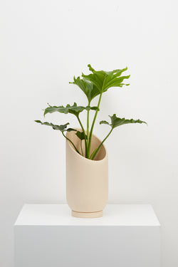 Small Summit Planter