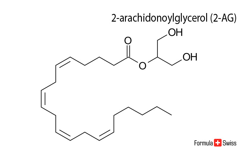 2-AG and anandamide - two important endocannabinoids