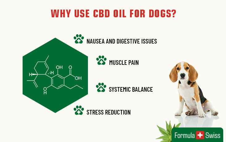 why use cbd for dogs