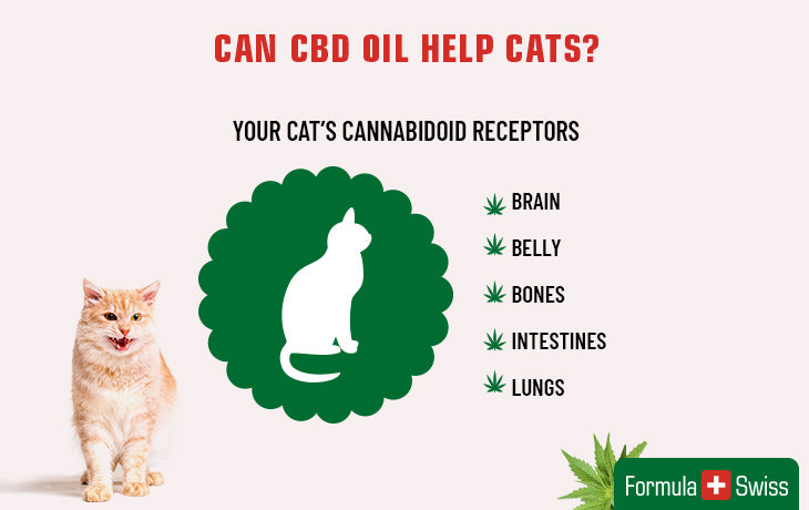cbd and cats