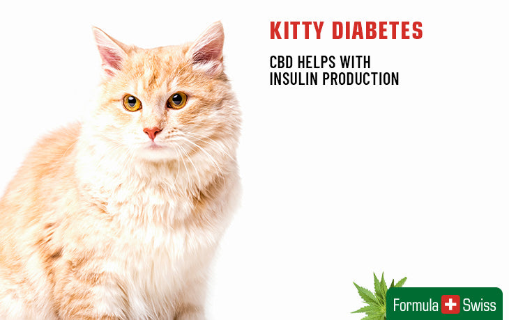 cbd oil for kitty diabetes