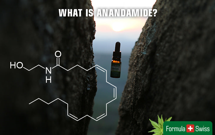 What is Anandamide