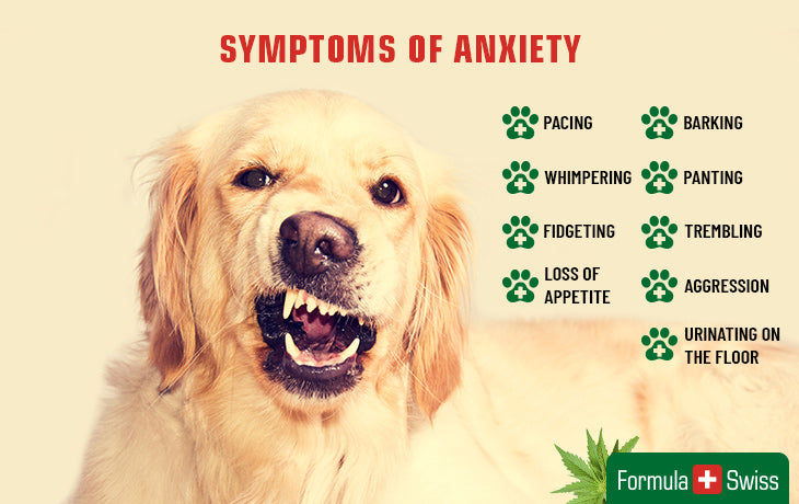 symptomps of pet anxiety