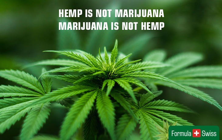 hemp and marijuana are different