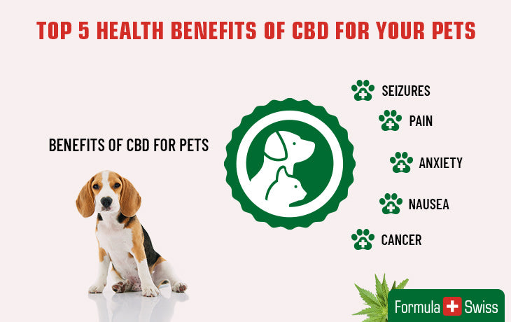 cbd oil benefits for pets