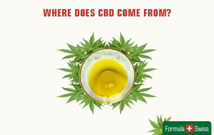 where does cbd come from?